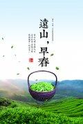 乐博国际茶叶价格表-乐博国际加盟费用