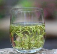 安吉白茶价格多少钱一斤?