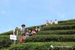 2017年茶山茶园旅游--茶道之行