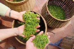 茶叶加盟店增加收入经营技巧