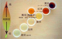 肠胃不好的人,喝发酵茶好还是不发酵茶好!