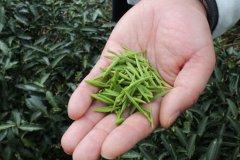 三十应知道抗衰老效果最好的茶叶